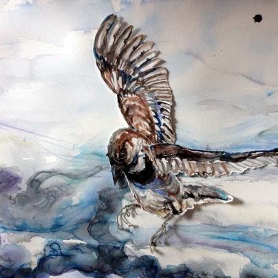 mjöhultsfågel - like a sparrow